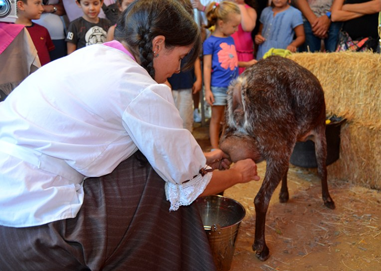 Beatriz Martínez ordeñando su cabra