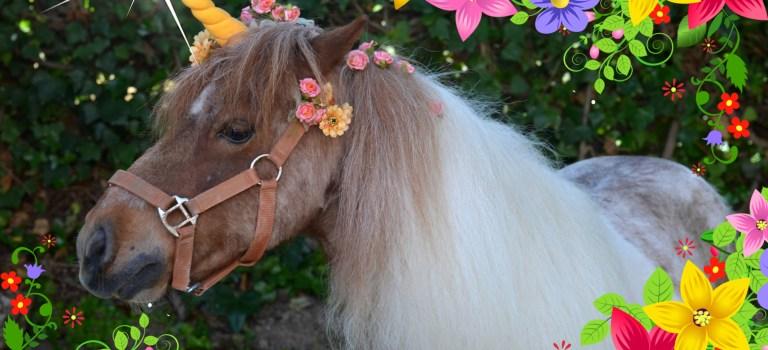 Sesión de fotos de Unicornio