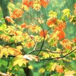 barish rain images10