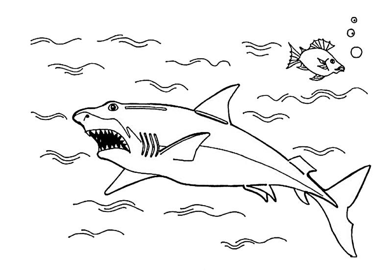 colorear tiburon para para para para e para dibujos para  hugo cabret auto electrical wiring