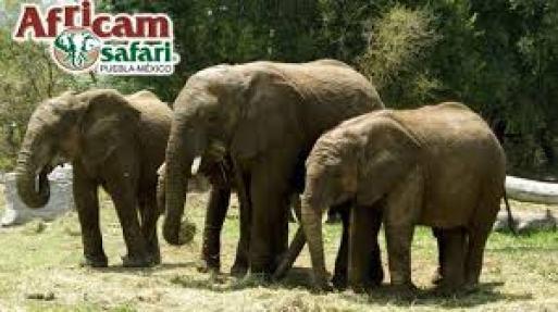 africam safari puebla fin de semana