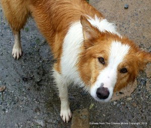 Connie, The Many Fold Wonder Dog