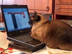 newscat