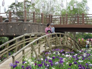 Monet-style bridges arch the iris fields