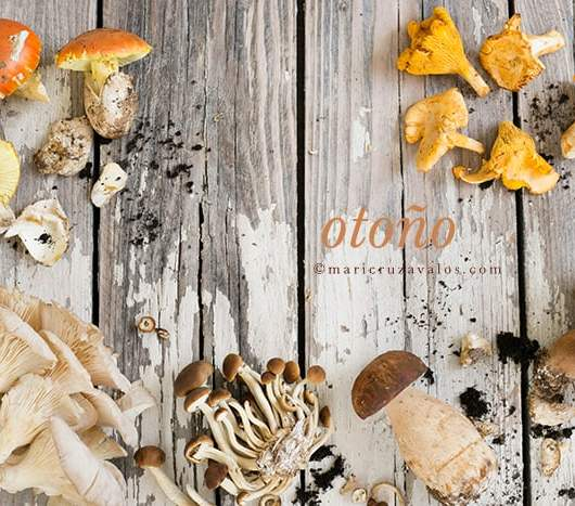 various_mushrooms