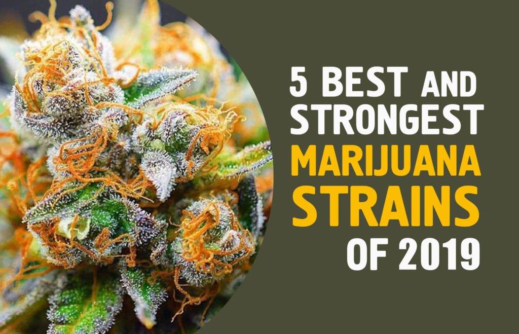 5 Best and Strongest Marijuana Strains of 2019