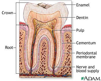 tooth sensitivity Archives - Dr Marilyn K Jones