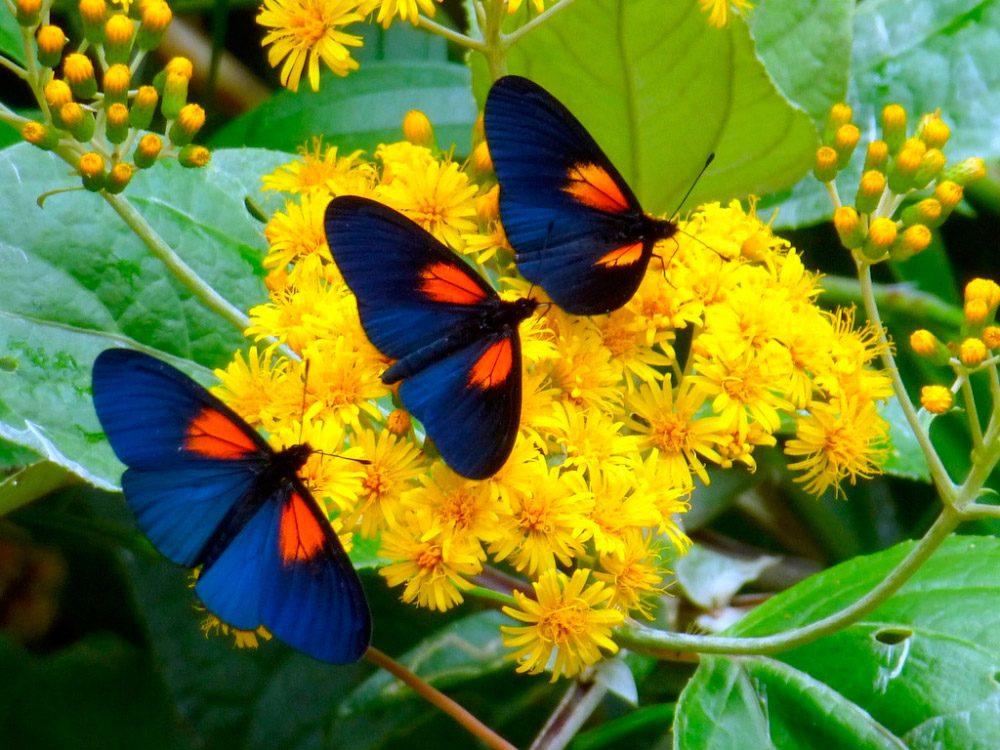 Daisy Iphone Wallpaper H 225 Bitos De Las Mariposas Diurnas Im 225 Genes Y Fotos