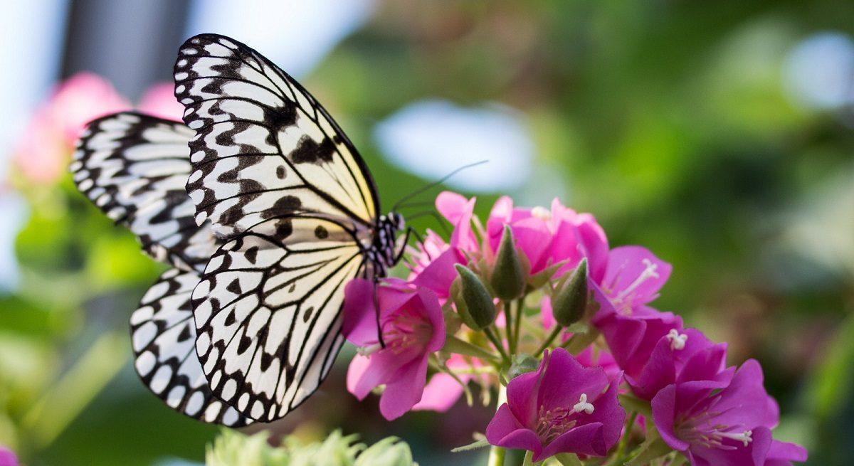 Mothers Day Hd Wallpaper Mariposas Gu 237 As De Especies Im 225 Genes Y Recursos