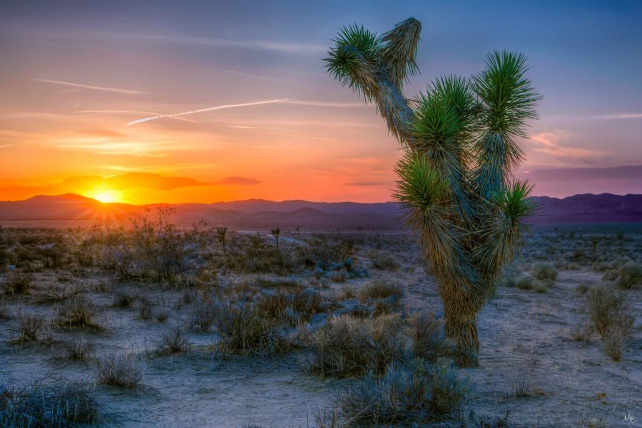 Mark Epstein Photo | Sunset in Joshua Tree
