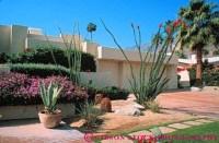desert garden agave ocotillo Palm Springs California Stock ...