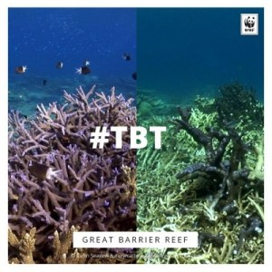 WWF TBT Great Barrier Reef