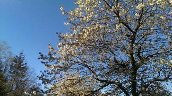 Next UK Warm Surge Looking Likely Between May 9-14 (Next Weekend)