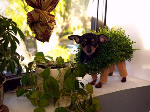 Funniest Pet Costumes! Is your pet ready for Halloween