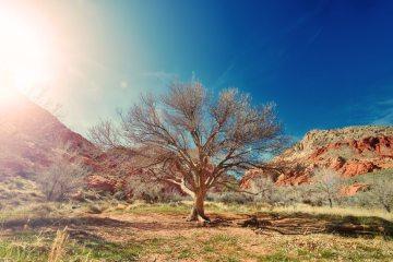 sun-desert-dry-tree-large