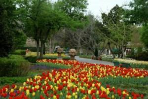 Dallas Arbortum