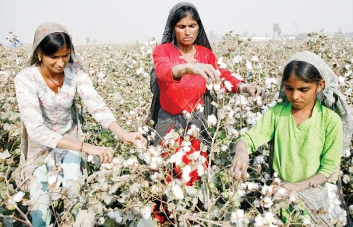 پاکستان: ایک خاتون کھیت مزدور کی زندگی