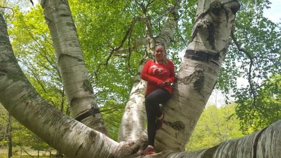 Big Birch