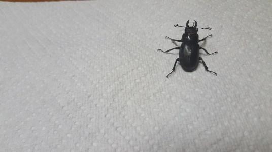 Big Ol' Bug