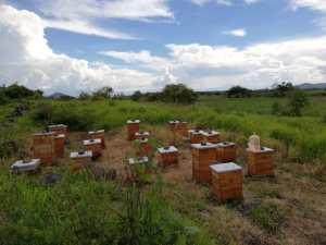 Cajones de miel