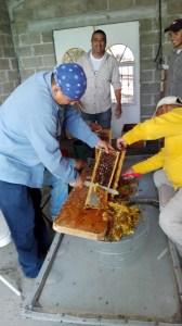 Castracion miel