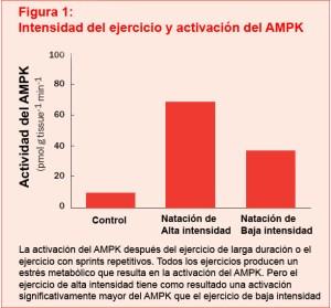 Activación AMPK según tipo de ejercicio
