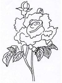 Bodegon Para Colorear E Imprimir Dibujos Bodegon De Frutas