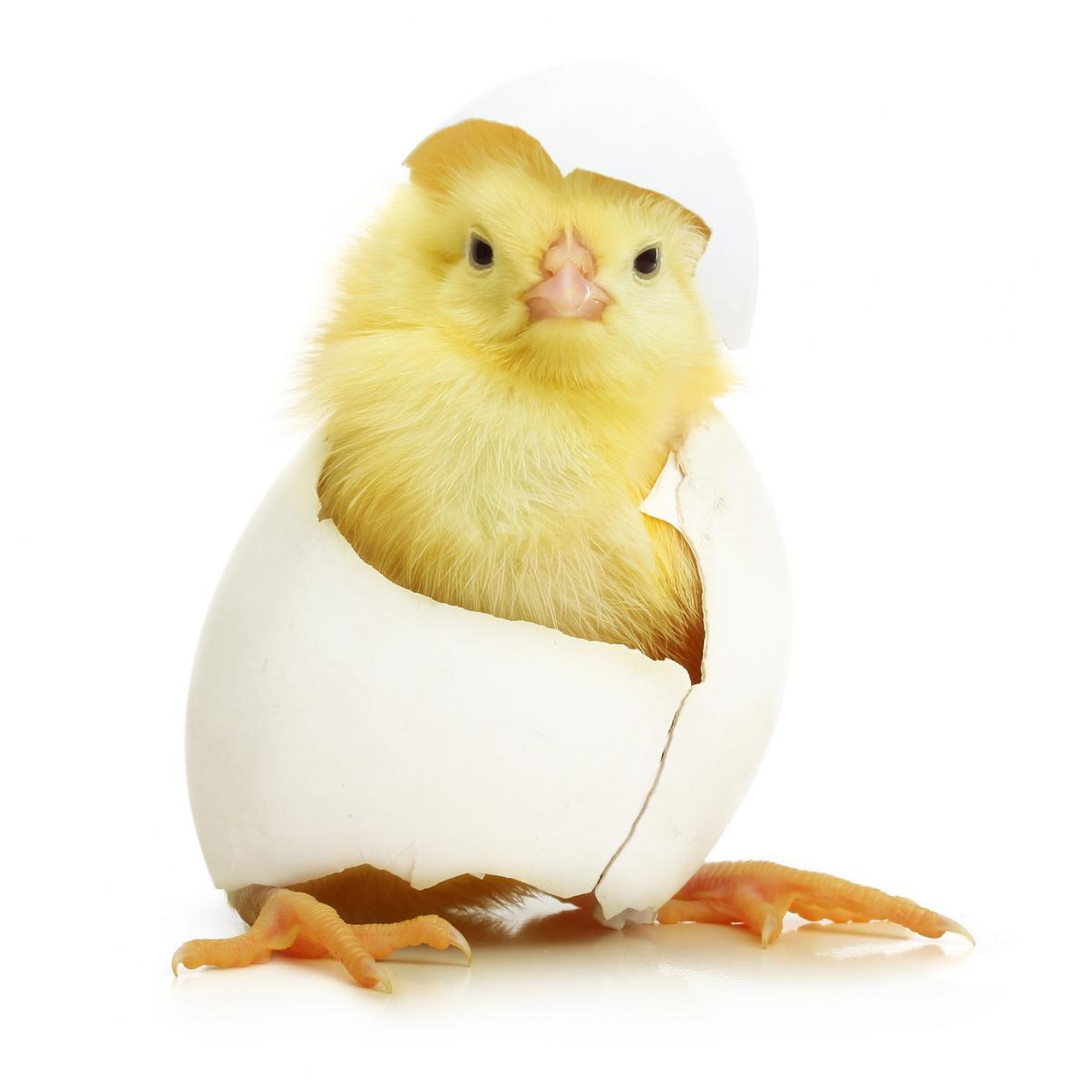 Cute Easter Egg Wallpaper Appuntamenti Con L Infinito N 1 Math Is In The Air