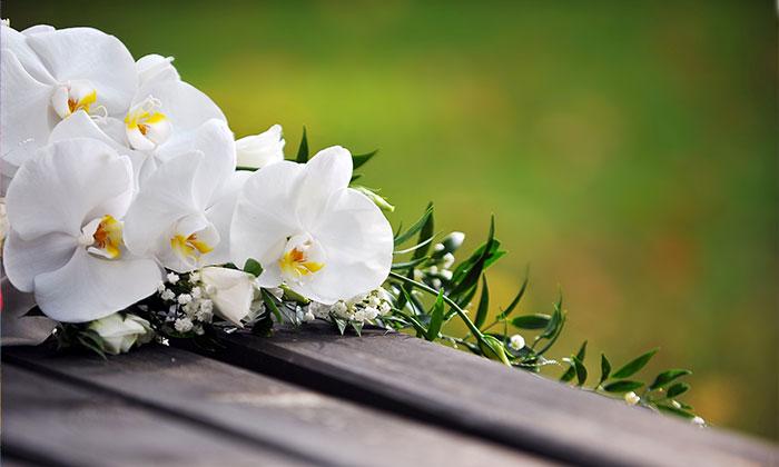 Girasole Matrimonio Significato : Il significato dei fiori matrimonio da sogno