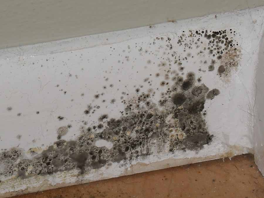 Mold Removal & Mold Inspection in Edmonton, Calgary