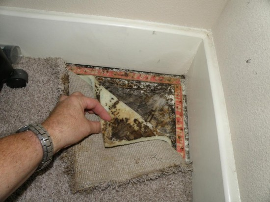 Mold Removal Mold Inspection Services In Calgary Alberta