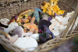 A mushroom collector's delight: a basket full of edibles