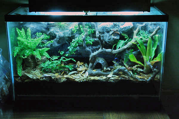 10 gallon fish tank terrarium - 10 gallon terrarium ... 10 Gallon Vivarium