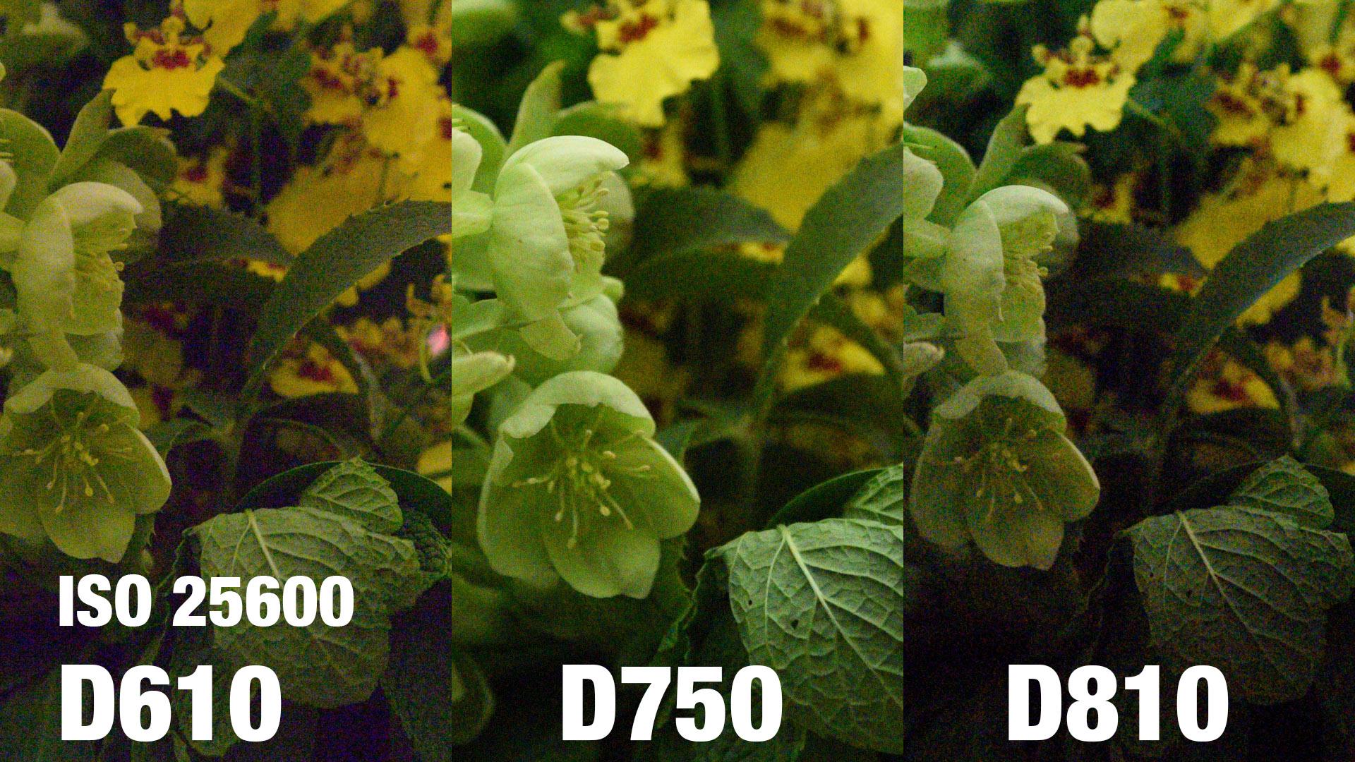 Floor Nikon D610 Vs D750 Rockwell Nikon D610 Vs D750 Iso Review Pits Nikon Against dpreview Nikon D610 Vs D750