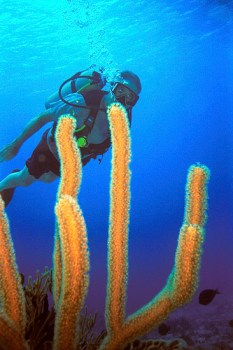 Scuba diving in beautiful underwater flora