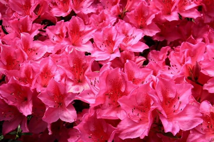 Flower filled Kalimpong days