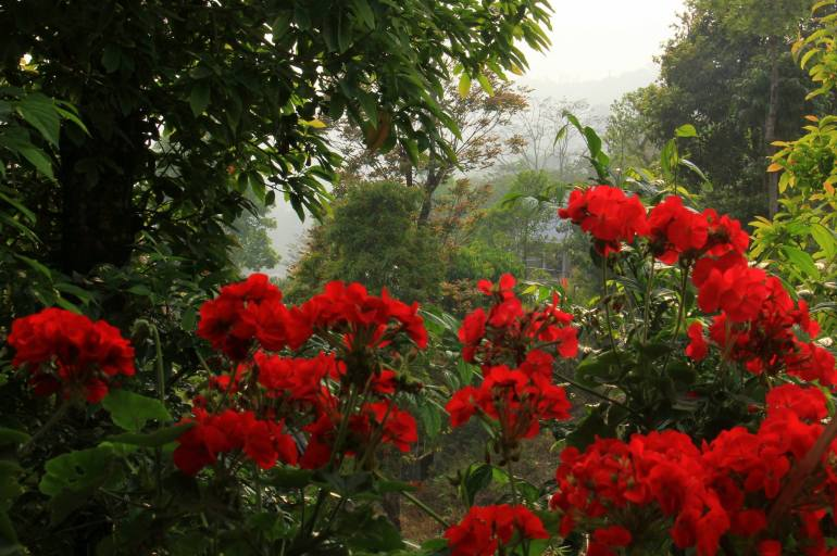 Kalimpong and the art of doing nothing