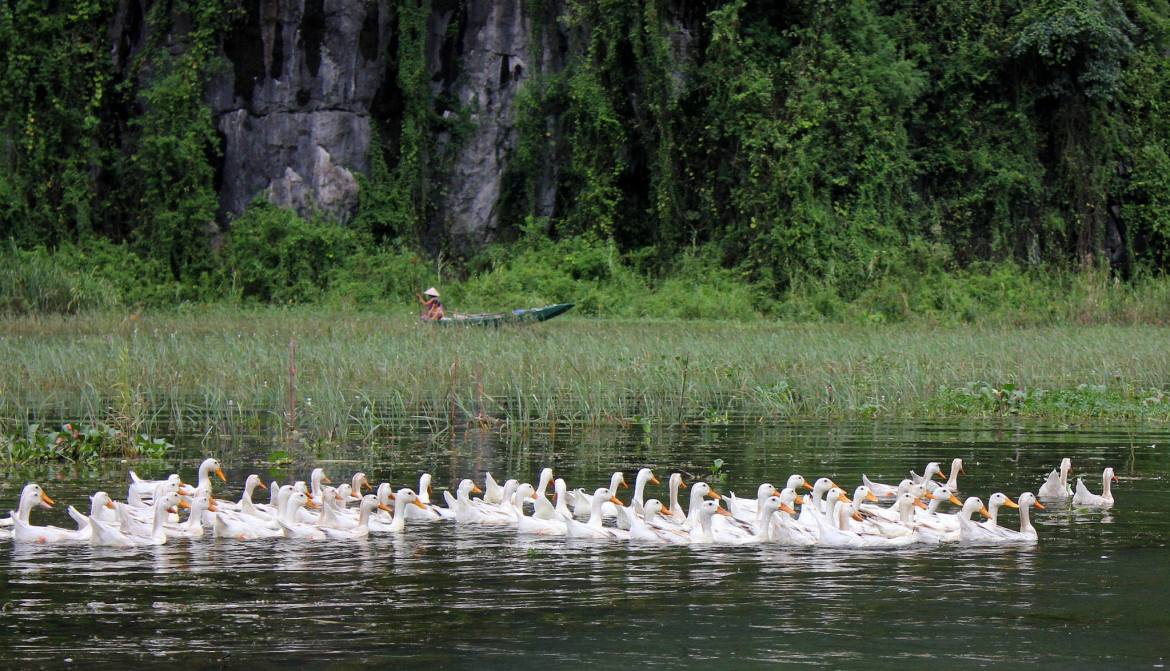 rural beauty of Tam Coc