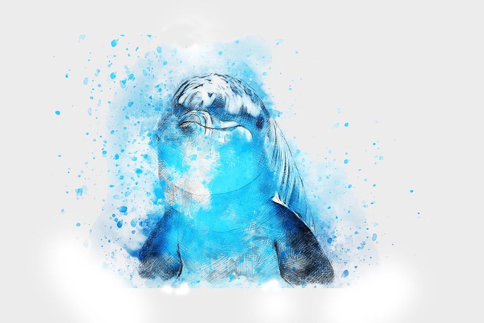 Kids Animal Wallpaper Free Photo Art Watercolor Animal Dolphin Nature Abstract