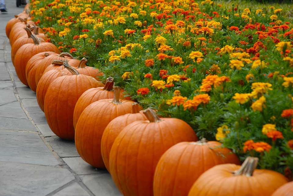 Fall Scenes Wallpaper With Pumpkins Free Photo Orange October Fall Pumpkin Autumn Halloween