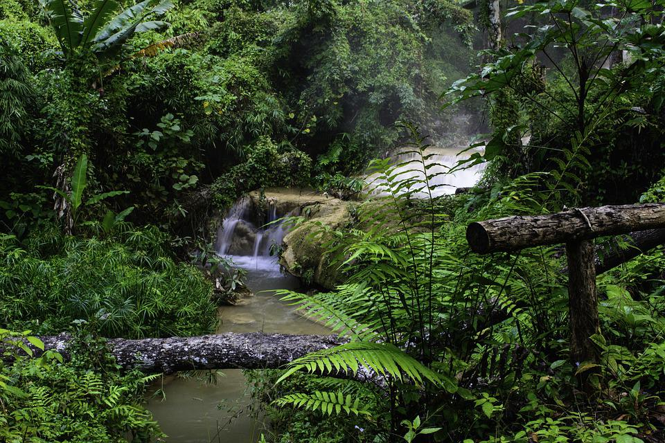 Medical Wallpaper Hd Free Photo Stream Jungle Nature Green Forest Forest