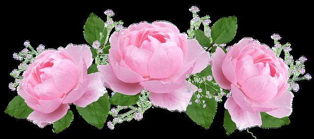Black And Pink Flower Wallpaper Free Photo Rose Floral Flora Flower Petal Max Pixel