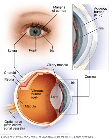 Cornea transplant - Mayo Clinic