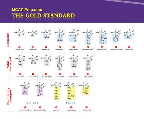 MCAT Biochemistry Review Summary Gold Standard MCAT Prep
