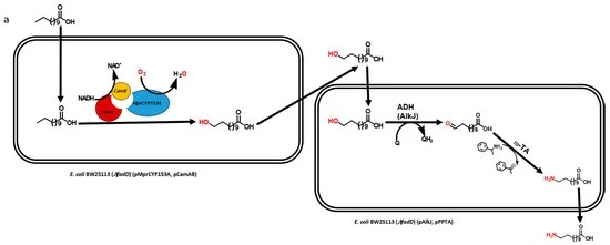 Catalysts Free Full-Text Biosynthesis of Nylon 12 Monomer, ω