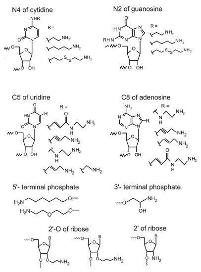Molecules Special Issue  Synthesis of Nucleosides, Nucleotides