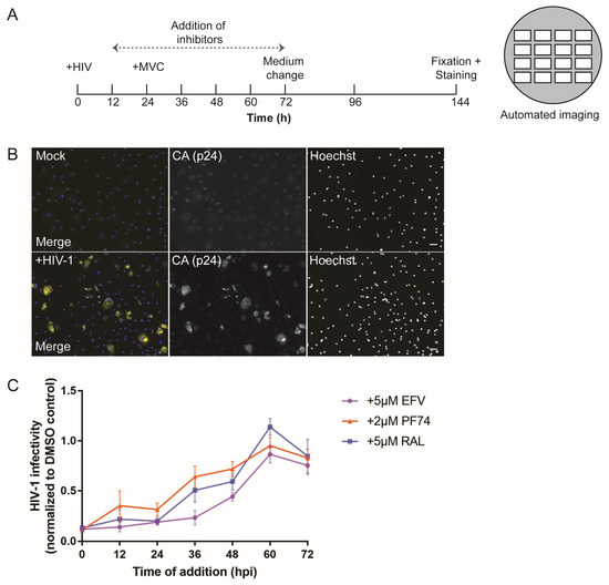 Viruses Free Full-Text Detailed Characterization of Early HIV-1