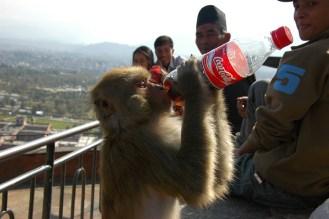 Bad monkey!