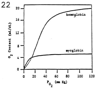 Hemoglobin and Oxygen Transport Charles L