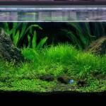 Faktor Penyebab Aquascape Gagal